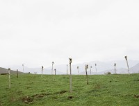 antas/2008/STRUCTURES-FOR-BIRDS-FIELD